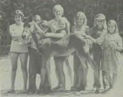Camp Yorktown Bay horses